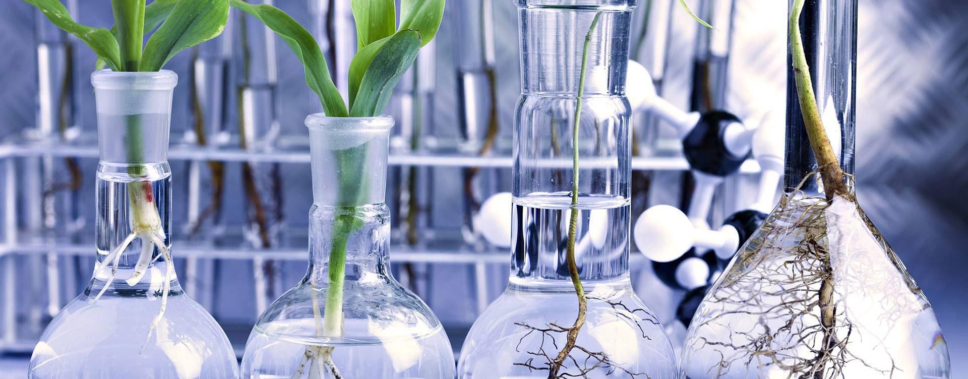 plants-lab-1920x1080-wallpaper-2148832